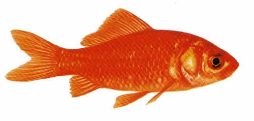 Ber 200l kaltwasser 2800l l b h 4 00x0 90x0 75 aquarium for Bunte goldfische